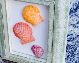Sea Shells On a Mini Frame