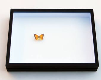 Insect box - 50x40cm black - to store your butterflies and insects.
