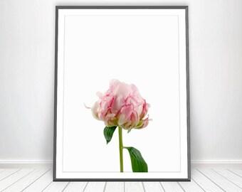 Pink Peony Print * Peony Wall Art Flower Print Peony Art Living Room Prints Flower Wall Art Flower Art Nature Photography Nature Prints