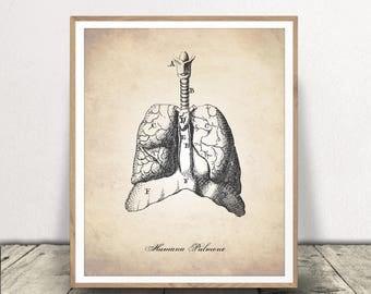 Human Anatomy Printable, Anatomy Drawing, Human Lungs, Medical Art, Human Anatomy Download, Human Anatomy, Lungs Drawing, Lungs, Anatomy Art