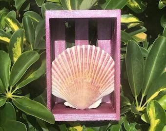 Seashell shadow box decor scallop seashell