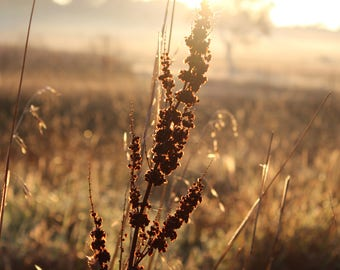 Early Morning Sun | Photo print