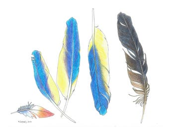 Blue Feathers - Original Hand Drawn Art