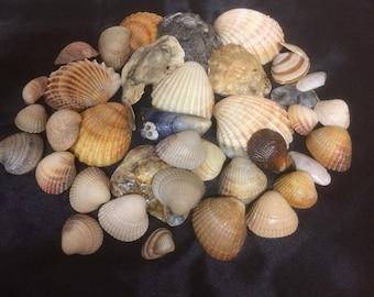 Mixed Assorted Sea Shells Natural Beach Seashells Aquarium Decoration Craft 200g Approx 40+ Shells