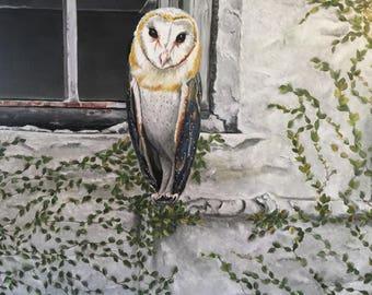 Owl Watching