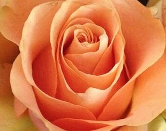 Blank Greeting Card 3: Peach Rose