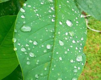 Droplet Droplet