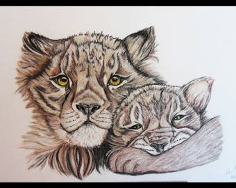 Cubs in charcoal and sanguine drawing