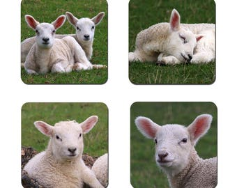 Set of 4 Lambs drinks coasters featuring award winning photography by UniquePhotoArts.