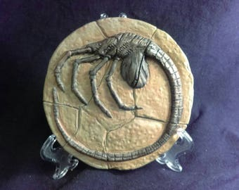 Fossilized Alien Facehugger stone replica