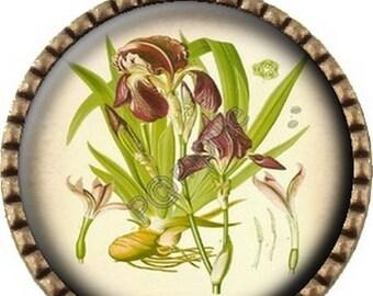 Bronze pendant Cabochon - Iris botanical (483)