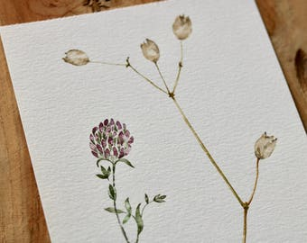Clover Hand Painted Watercoloour Original Artwork