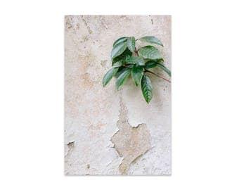 Botanical Wall Art,  Botanical Photograph, Wall Art, Digital Print, Modern Wall Art, Nature, Home Decor, Botanical Print, Botanical Photo