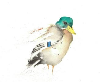 Watercolour print of Mallard Duck