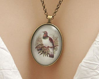 New Zealand Wood Pigeon bird, vintage art print, large oval Picture Pendant, 40x30mm, glass dome pendant, cameo