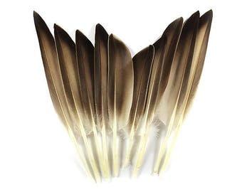 Mallard Wing Feathers Natural-Grey 10710