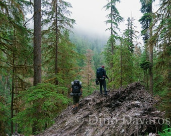 Gazing into the Abyss - Olympic National Park