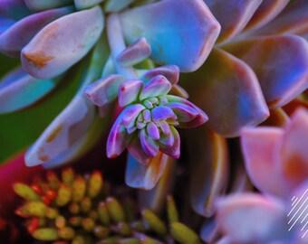 Saturated Succulent
