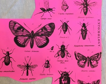 Entomology #2 Unmounted Rubber Stamp Set of 18 Bugs Butterflies Insects Moths Beetles Latin Bees Card Making Mixed Media
