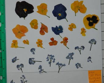 Real Pressed Dried Flowers Over 25 Assorted Flowers with Pansy and Forget-me-nots Ready for your project Craft supply