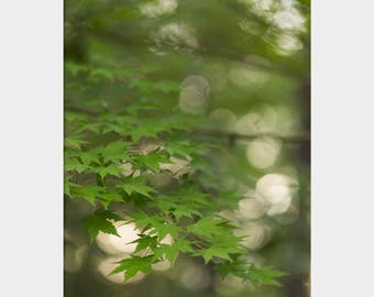 Surreal Art, Green Nature Art, Botanical Photo, Large Green Wall Art, Woodland Photograph, Forest Photograph, Green Forest Photo, Leaves Art