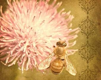 50% OFF SALE Garden Nature Photography Honey Bee Home Decor Gold Pink Flower Bee Photo Flower Gardeners Under 25 - 5x5 inch Fine Art Print H