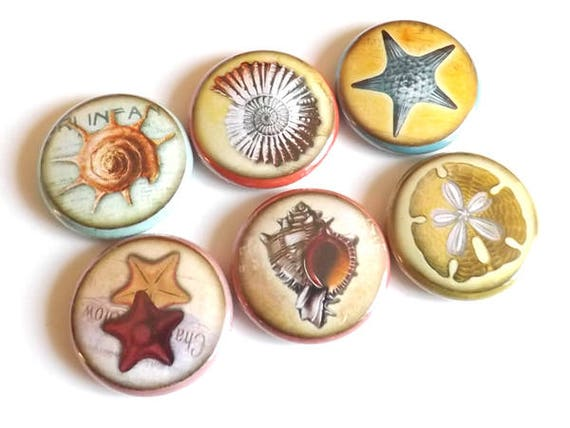 Fridge Magnets Ocean Sea refrigerator beach party favors stocking stuffers starfish shells sand dollar gifts flair pins nautical coastal