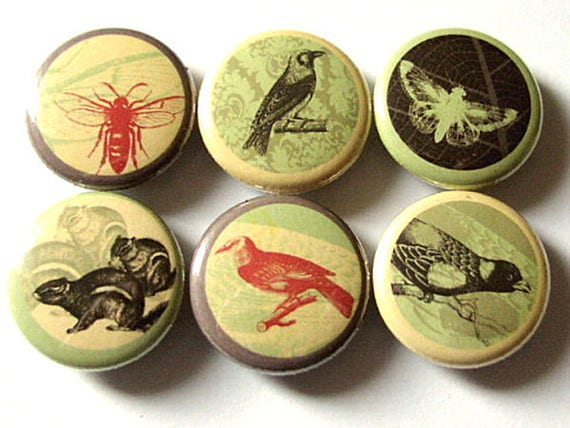 Button Pins Woodland Creatures Squirrel Birds Bee Moth Crow party favors stocking stuffers gifts nature forest magnet badges