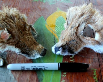 Pair of shaped red fox faces for crafts, taxidermy practice, display, more DESTASH