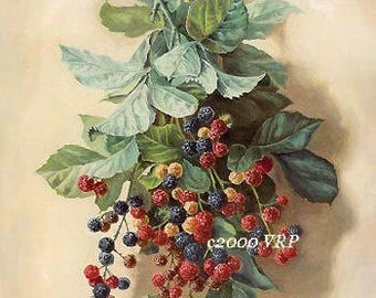 French, Blackberries, Art Print, Paul de Longpre, Berry, Half Yard Long, CP132, Blackberry, Fruit, Shabby Chic, French Kitchen