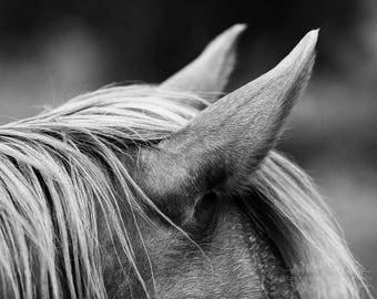 Horse Photo, Equestrian Print, Farmhouse Decor, Fine Art Photography, Rustic Photograph, Equine, Black and White, Monochromatic, Grey