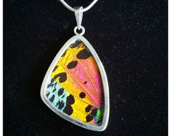 Real Butterfly Wing Jewelry Sterling Silver Pendant Necklace Urania Ripheus XL Wing ** FREE CHAIN**