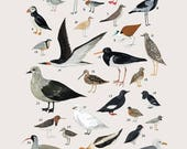 Creatures of the order Charadriiformes- vintage inspired science poster by Kelsey Oseid
