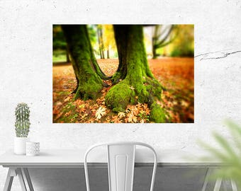 Nature photography - MOSSY TREES - fall colors - autumn landscape wall art for home or office