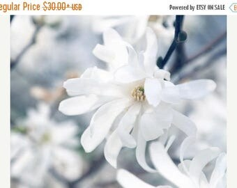 Magnolia Photograph or Canvas Art, White Flower Photo, Magnolia Print, Floral Photography, Cottage Chic Decor, Spring Flower Photo