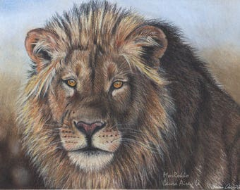 African Lion -5x7 Fine Art Print - By Laura Airey Le