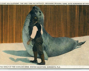 Giant Sea Elephant Ringling Circus Sarasota Florida 1920s postcard