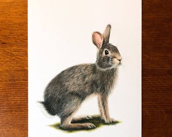 Original Eastern Cottontail Drawing