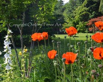 Landscape Photo Card Poppy Flower Greeting Card Orange Poppy