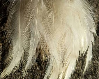 Natural Speckled Dusty Ivory Rooster Hackle Feathers - 50