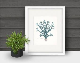 Coastal Decor Pacific Sea Kelp Natural History Giclee Art Print No. 3 8x10 - colors: tide pool, coastal blue