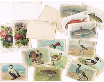 Baking Soda Trade Cards - Church Co, Arm & Hammer, Dwight - Vintage 1900s Lithograph Advertising Cards - Game Birds, Fish, Flowers -14 cards