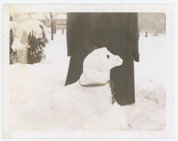 Vintage Polaroid Snapshot Photo: SnowDog, c1960s (710613)
