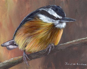 Bird Art Painting Nuthatch SFA Wildlife Original hand painted bird acrylic painting by Australian Artist Janet M Graham