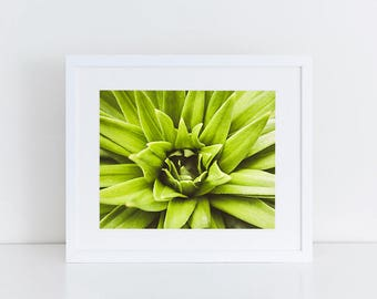 Succulent Plant - Flowers- Fine Art Photography Print