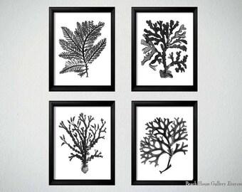 Black White Coral Wall Art, White Black Coral Print, Black White Wall Art,
