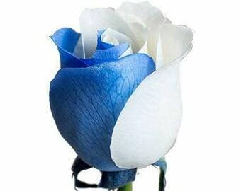 Blue white rose flower seeds,577,blue heart white rose,flower roses seeds, roses from seeds,planting roses,growing roses from seeds