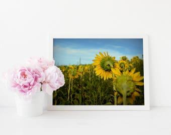 Sunflower Field Fine Art Print