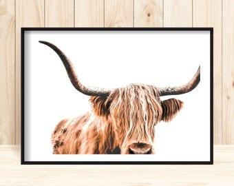Highland Cow Print, Cow Printable, Wildlife Photography, Animal Prints, Animal Wall Art, Scottish Animals, Cow Wall Art, Large Wall Art, Cow