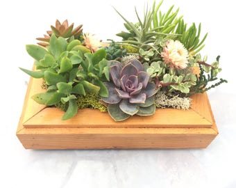 Live Vertical Garden Succulent Planter Frame  for indoor & outdoor
